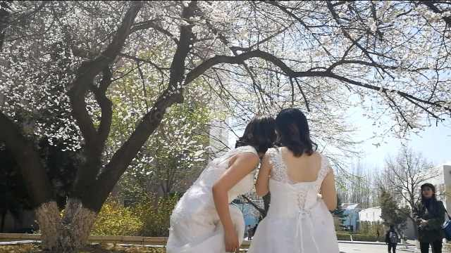 桃花满校园,大4女生穿婚纱拍毕业照
