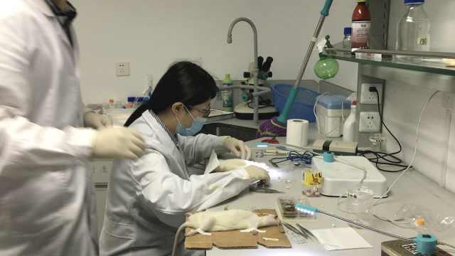 医学生为小白鼠献花:它们值得尊敬