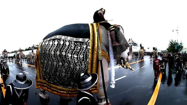 泰国大象告急,数量锐减只剩几千头