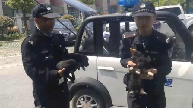 9只小奶狗遭遗弃,巡逻民警带回所