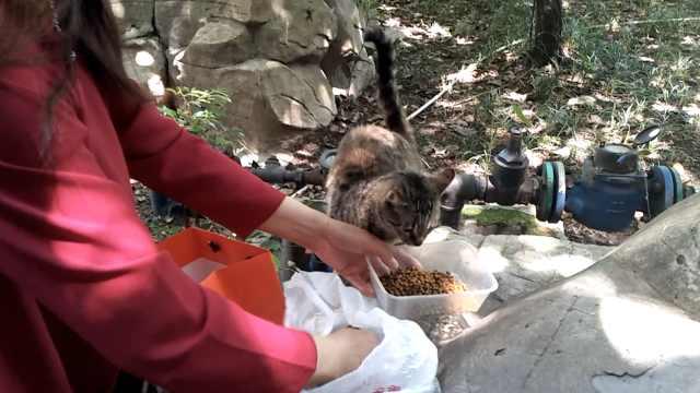 她坚持喂养流浪猫狗8年:老公支持