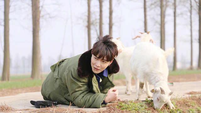 张艺兴回应学羊吃草:人生需要尝试