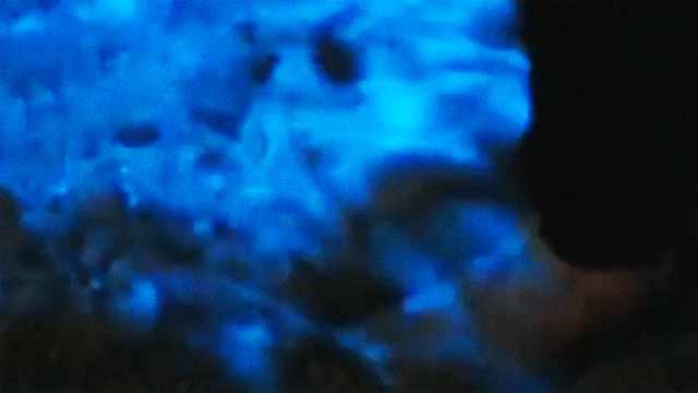 太美了!加州海滩夜晚惊现蓝色荧光