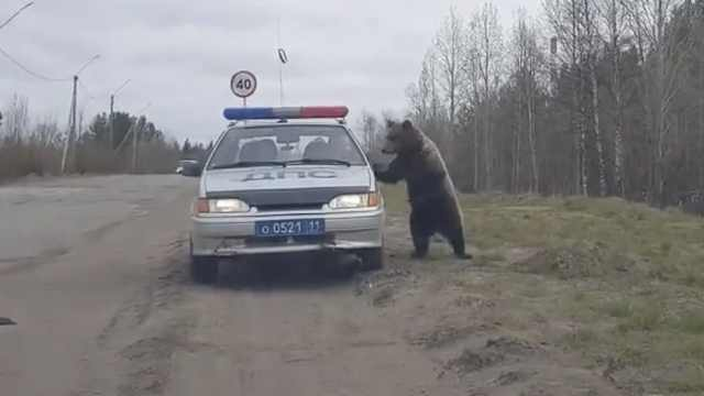 爆笑!熊和巡逻队警察热情打招呼
