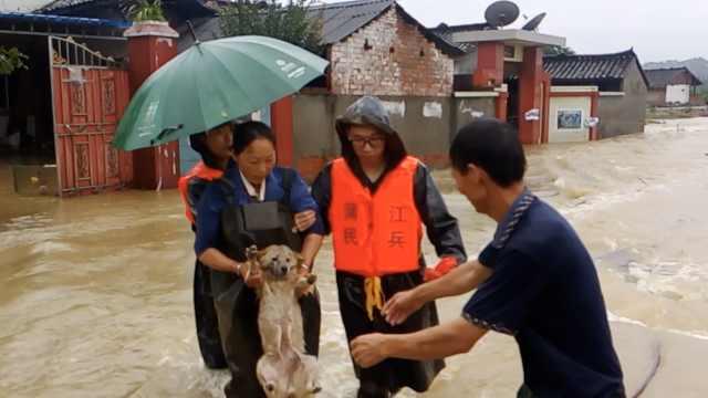 洪水淹村庄,他们逃生不忘抱出狗狗
