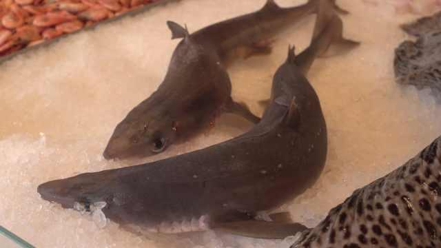 挪威市场卖鲨鱼!维京人吃地衣果腹