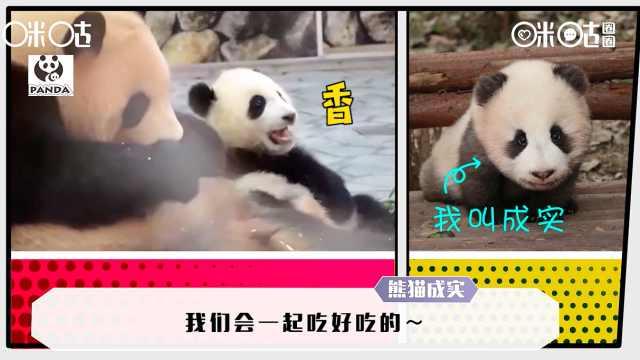 在熊猫国,有一种可爱叫母爱如山!