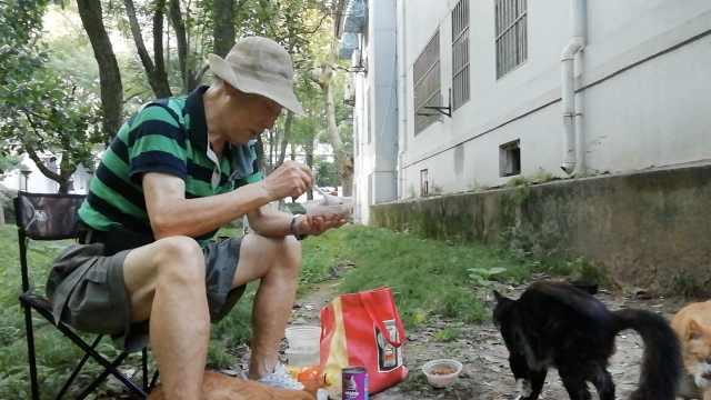 8旬翁喂流浪猫月花近千:没空去手术