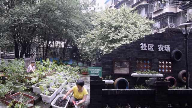小区空地变农场,居民种蔬菜送孤老