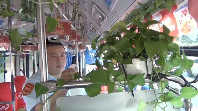 公交挂满绿萝,乘客赞司机