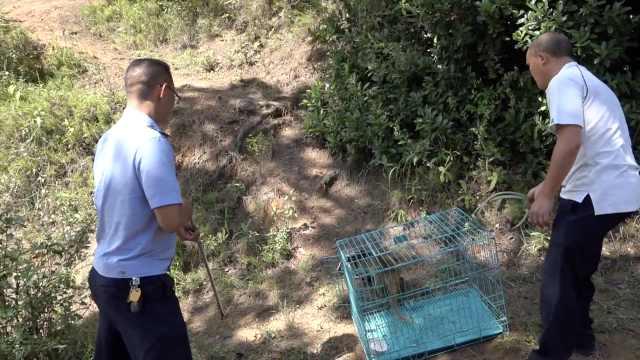 他掏钱救下果子狸,竟又在微信里卖