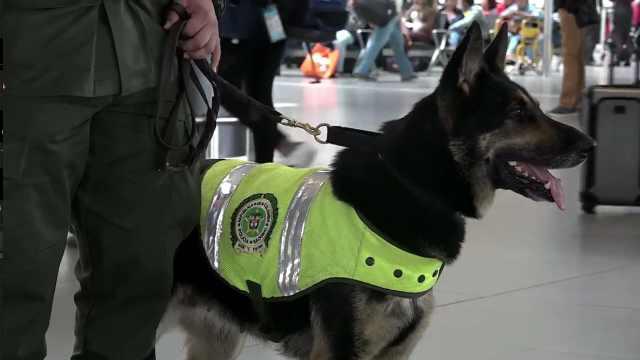 英雄缉毒犬,毒枭悬赏7万美元想杀害