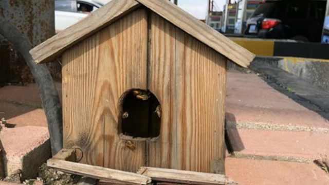 蜂车过收费站,蜜蜂不走愁坏收费员