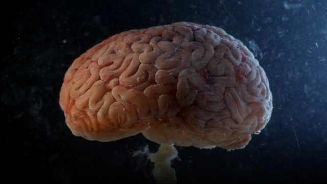 大脑不可信!原来记忆也可以伪造
