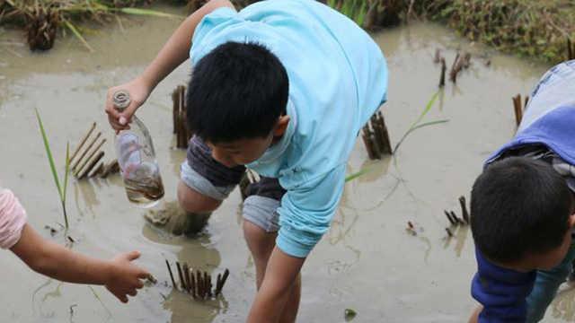 为什么现在农村田里抓不到泥鳅了?