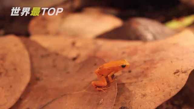 5种奇特的青蛙!
