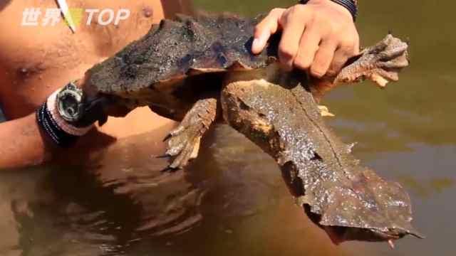 世界上5种最奇特的乌龟!