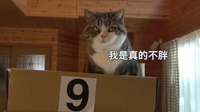 深爱箱子的猫咪