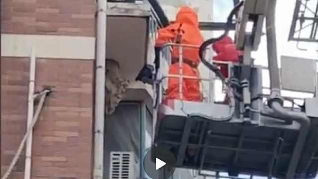 窗外现巨型马蜂窝 消防架云梯摘除