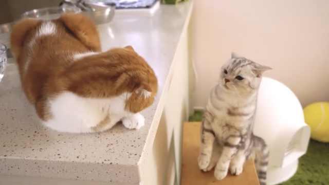 小猫惹恼粑粑,真诚道歉会被原谅吗?