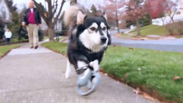 3D打印助残疾小狗重获新生!