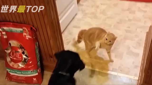猫和狗有多大仇,见面就冲上去怼