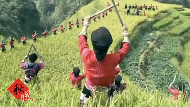 村民梯田唱歌,打粑粑喝油茶庆丰收