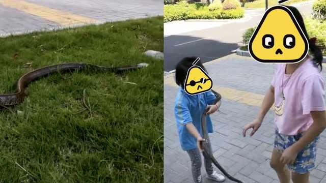 父捡蛇给女童遛:以后送她当特种兵