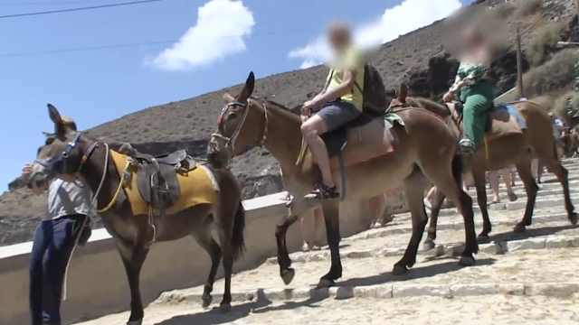 不堪重负!希腊禁止胖游客骑驴观光