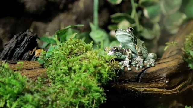 青蛙为什么要冬眠这么久?人呢?