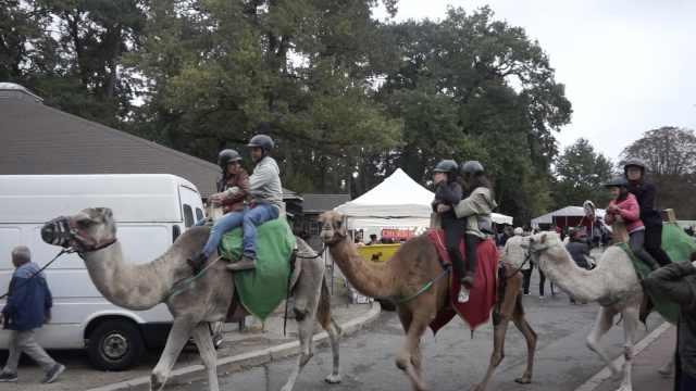 法国举行最大宠物展,还能骑骆驼