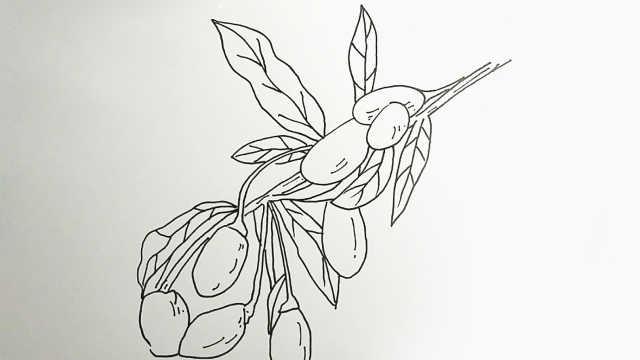 3分钟线描画,用圆珠笔画枸杞!