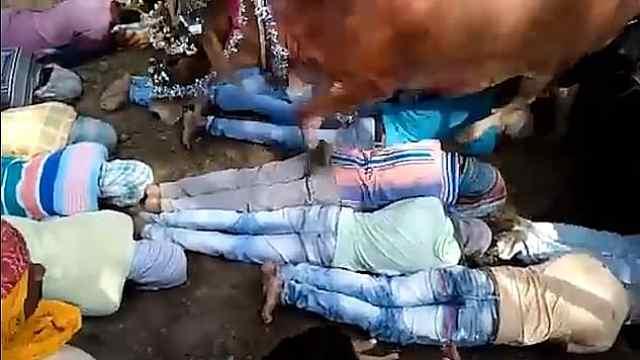 印度有人群躺地上被牛踩:踩来财富