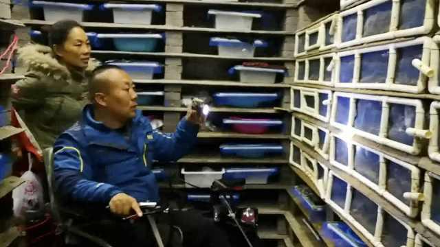 轮椅哥养蜗牛致富:愿包吃住教残友