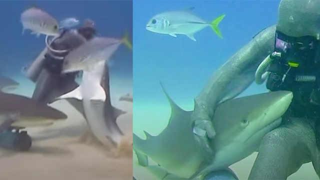 """她能""""听懂""""鲨鱼的话,成鱼群朋友"""