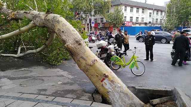 猛犸视频丨热力管道爆裂殃及大树