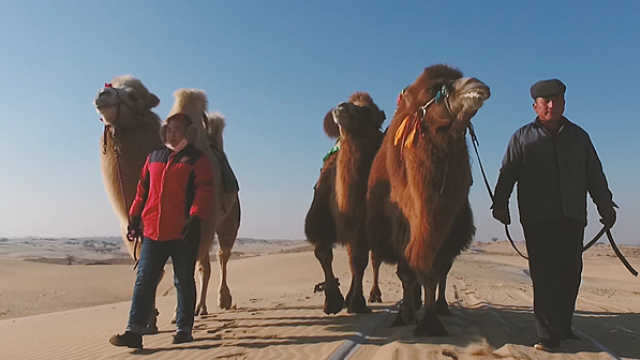 心迹:沙漠中的驼铃,抱团吃旅游饭