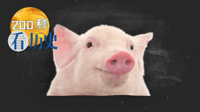 中国人是怎样驯化猪的?