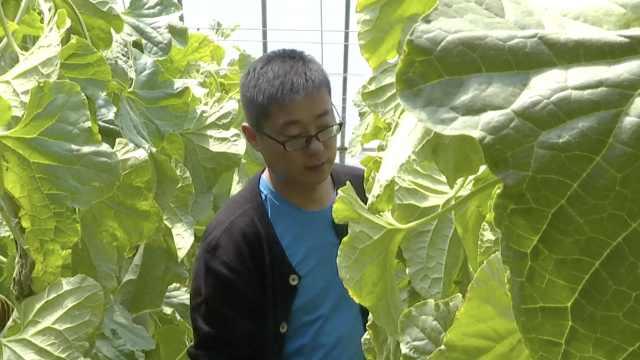 他弃北京高薪回乡创业:专业吃瓜