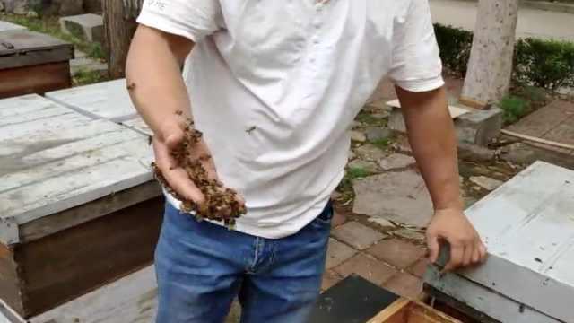 电焊工改行养蜂,练绝活让蜜蜂按摩
