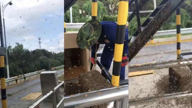 密集!3万只蜜蜂集体出逃,咬伤5人
