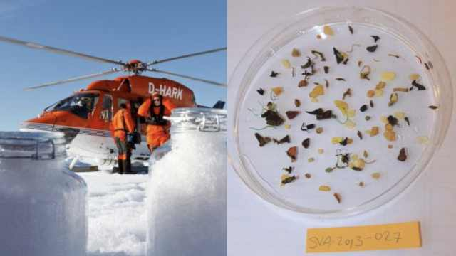 北极下塑料雪!每升含1万塑料微粒