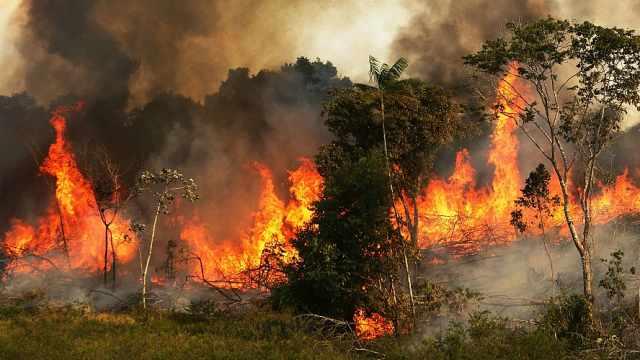 巴西总统指NGO放火