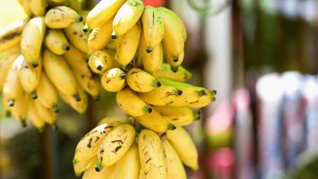 气候导致!2050年香蕉或将完全消失