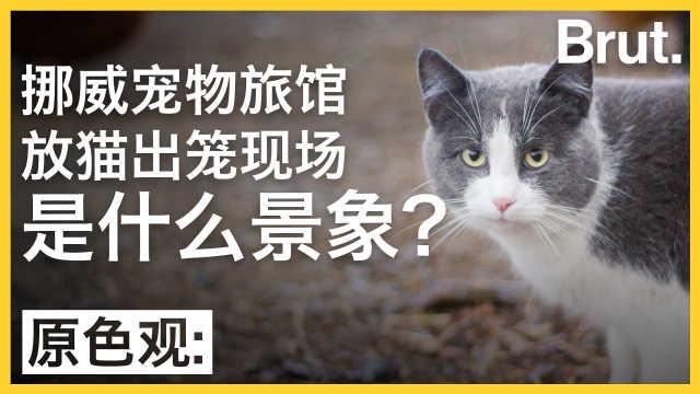 猫猫旅馆放猫出笼现场是什么景象?