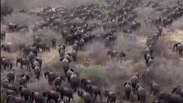 赞比亚干旱三月,大象逃出公园伤人
