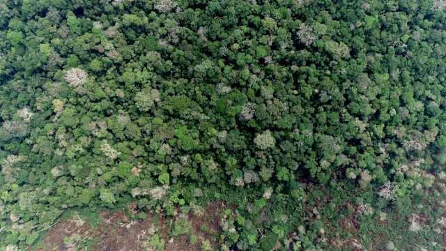 亚马逊雨林逼近临界点意味着什么?