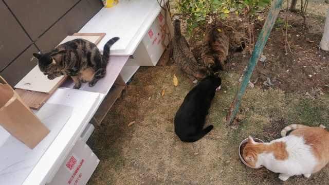 男子定点为流浪猫喂食绝育:月花8千