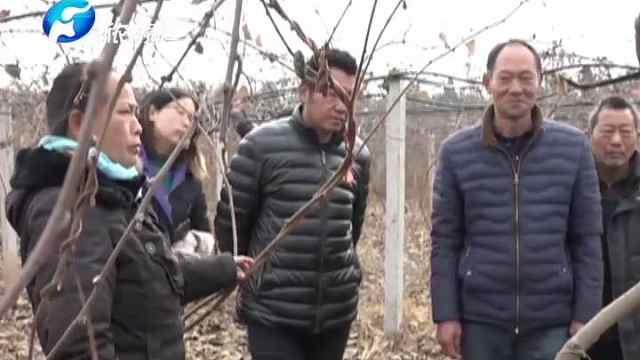 内乡: 猕猴桃变金银果