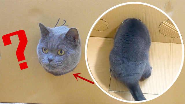 猫胡须能过的地方,身体也能过吗?